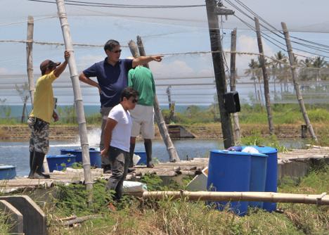AQUACULTURE: Vannamei, a vital export commodity – The Philippine