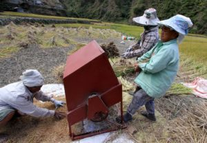 Farmers adversely affected by Rice Tariffication Law to receive cash aid – DOF