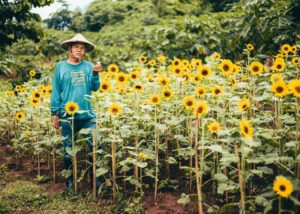 'Sunflower Man' tills the soil with just one hand