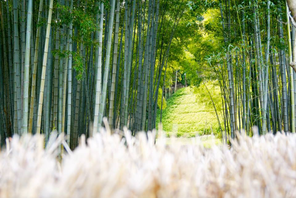 PH plans to create a 19,000 hectares of bamboo plantation